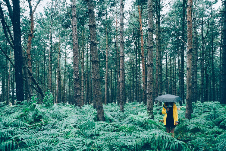 Rain Beauty In Nature Day Ferns Forest Fungus Green Color Growth Land Nature Non-urban Scene One Person Outdoors Plant Rain Coat Scenics - Nature Tranquil Scene Tranquility Tree Tree Trunk Trunk Umbrella Unrecognizable Person WoodLand Yellow