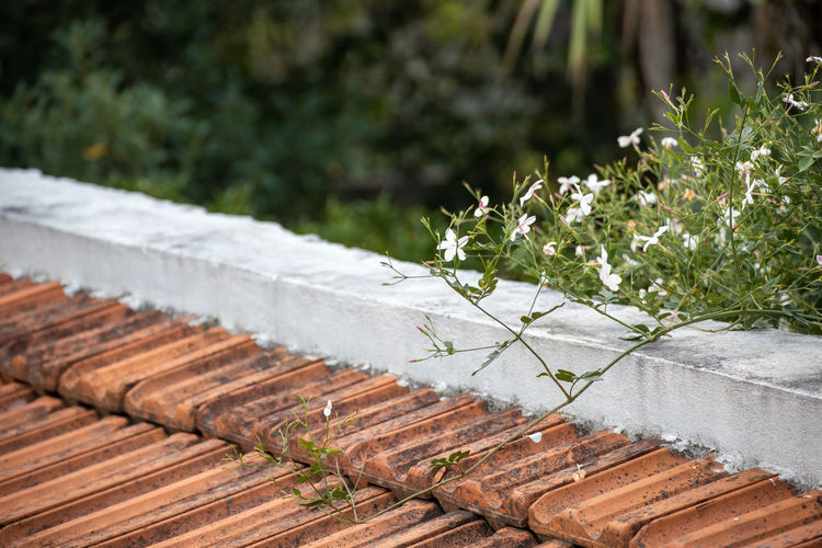 High angle view of flowering plants on roof