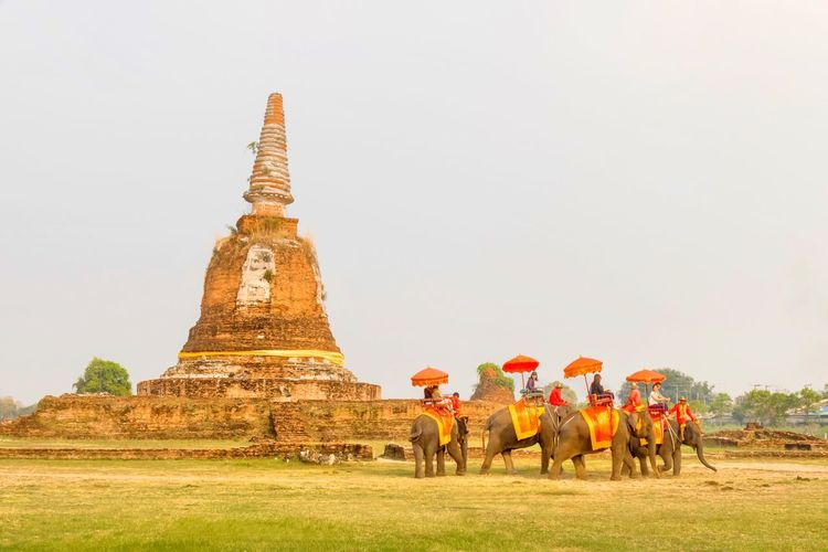 The elephant riding with Thai ancient mahood costume with old Pagoda background in Ayuthaya Thailand February 20,2018 Tourist Histrorical Park Asian  Bangkok MaHood Ayutthaya Thailand Bricks Group Of Elephants Field Pagoda Riding Elephant Grass Sky Parade Architecture Built Structure Group Of People Real People Sky Nature Travel Destinations Religion History Belief The Past Travel Day Outdoors