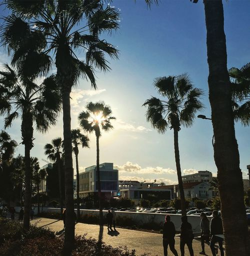 Shore Cars Cyprus Limassol Limassol Marina Tree Sky Plant Architecture Nature City Building Exterior Silhouette Outdoors Real People Street Group Of People Tree Trunk Trunk Sunlight Incidental People Palm Tree