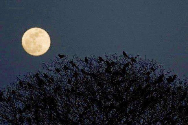 L'emozione antica della luna piena....