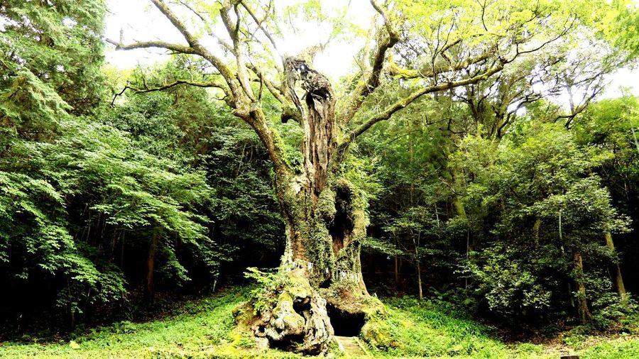 Forest Japan Japanese  Trees Wonderful Amazing