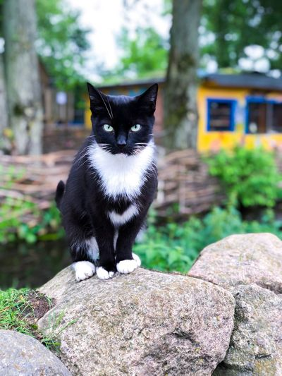 #Cat #Animal