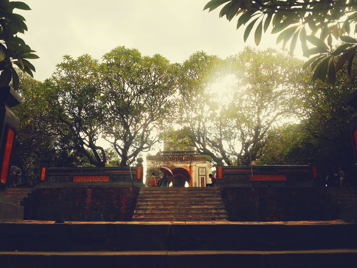 Tree Steps Outdoors Tranquil Scene Tranquility Scenics Royal Built Structure Place Of Worship Culture Religion Tuductomb Huế Tomb EyeEm Vietnam Taking Photos EyeEm Best Shots Eyeemphotography Vscovietnam Vietnam Architecture VSCO Ancient Beauty In Nature Tree