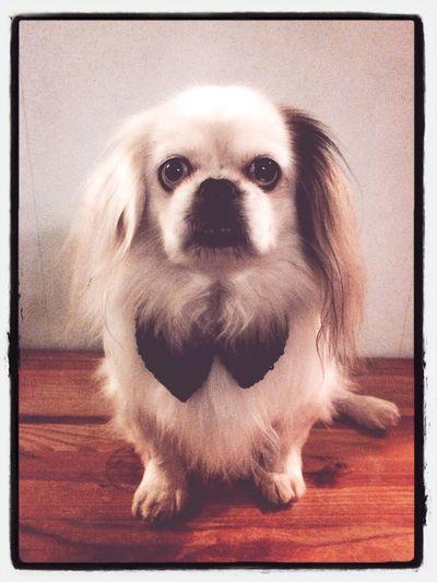 I Love My Dog Love ♥ my Dog 👑King💎Kurt👑