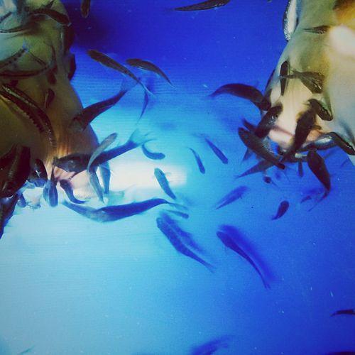 fish SPA