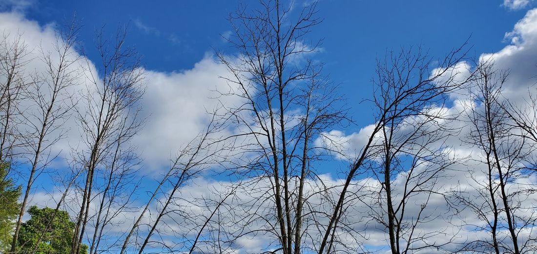 blue Sky Bare