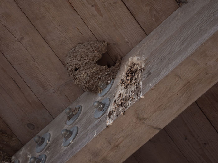 Swallow's house and toilet Architecture Brown Built Structure Day Hardwood Hardwood Floor High Angle View Indoors  Nature Nest No People Swallow's Nest Wood - Material