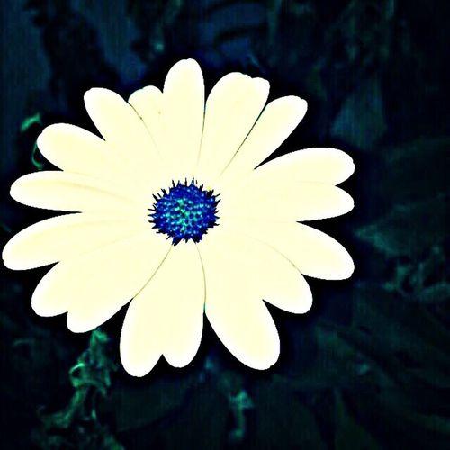 Flower Blue White Taken By Friend
