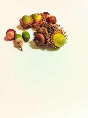 小さい秋、見つけた。Small fall, I found Nature_collection EyeEm Nature Lover 秋