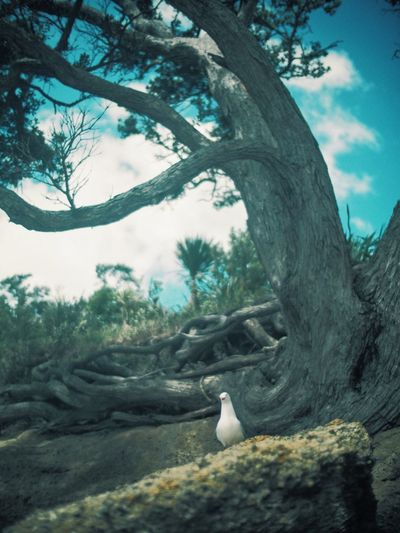 Close-up of swan on tree against sky