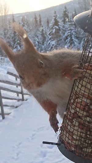 Squirrel Closeup Day Snow Close-up Nature Hello