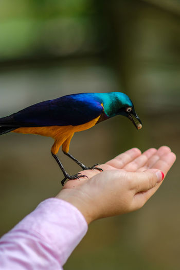 Cropped hand of woman feeding bird outdoors