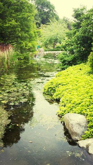 Botanical Gardens Dunedin