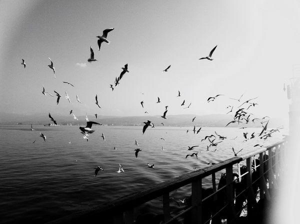 B&w Street Photography EyeEm Best Shots EyeEmBestPics Steamboat Istanbul Blackandwhite Seagulls
