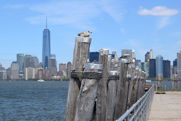 Seagulls perching on wooden post by pier at hudson river against city