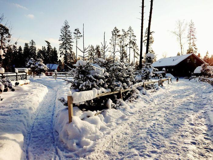 #winter Cold