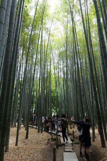 People Landscape Bamboo Eye4photography  EyeEm Best Shots Holiday