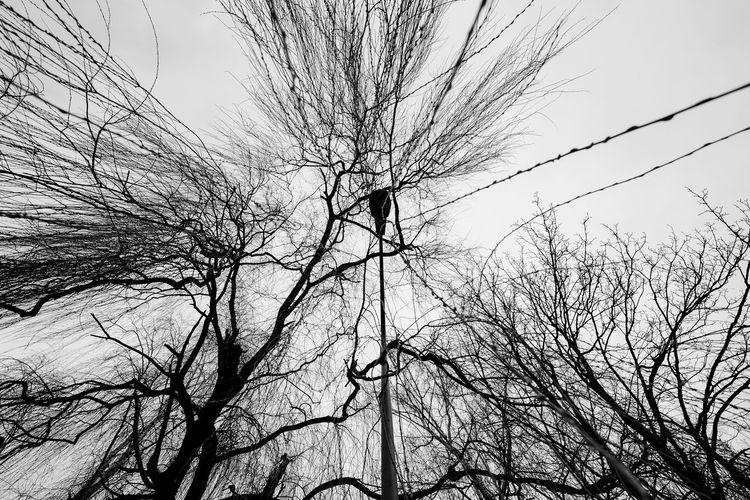 Trees Lamppost Wide Angle Blackandwhite Lookingup