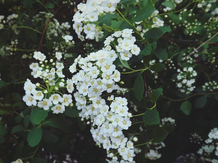 Spring Spring Flowers Wonderful White Blossom Mykh Mykharkov Kh Relaxing Hello World