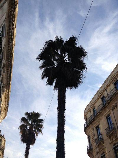 Soleil A Montpellier