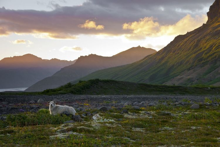 Dog on mountain against sky during sunset