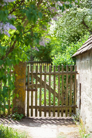 Picket fence and closed gate to a cottage garden Built Structure Cottage Garden  Door Entrance Fence Garden Gate Green Color Green Thumb Nature No People Outdoors Overgrown Path Picket Fence Protection Summer Tree Vegetable Garden Wooden