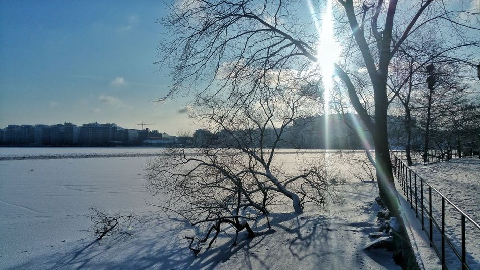 Nature Landscape Lake Water Tree Cold Temperature Lake Sky Snow Covered White Snow Winter Weather Condition Bare Tree Weather