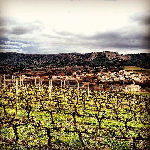 Après le vin de table, le vin de terre. La vigne quoi.