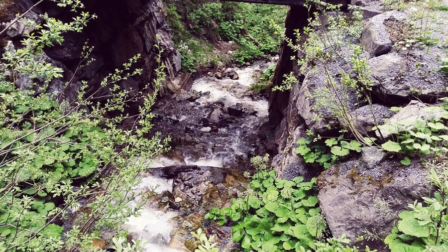 Fluss Des Lebens Natur Water