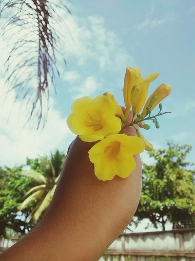 Flores Yellow Dayperfect Lovers Fotography Fotografia By Saau 📷💞