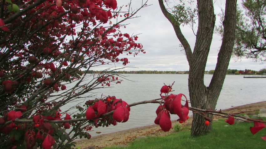 Out Shooting By The Lake Cloudy Day Early Fall Splash Of Red Quiet Moments Through The TreesLake Cadillac Pure Michigan