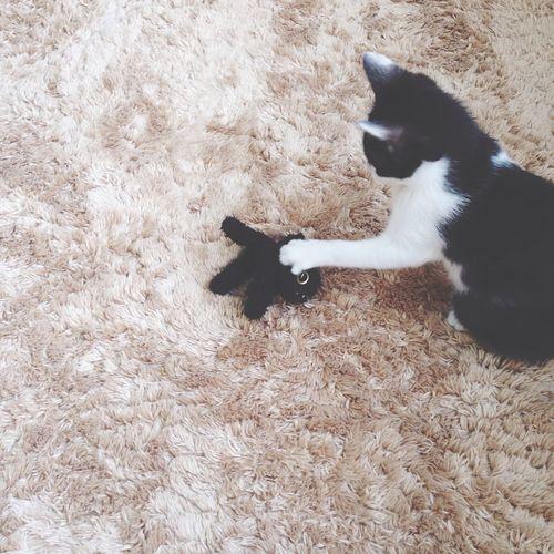ゆげお兄ちゃん、、、、 子猫 白黒猫 ハチワレ