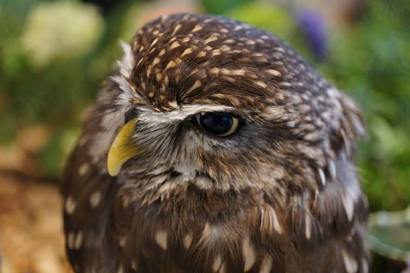 フクロウ ふくろうカフェ Bird Animal Wildlife One Animal Animal Body Part Bird Of Prey Looking At Camera Eye Portrait Beak Feather  Close-up Animals In The Wild Headshot Outdoors Owl Nature No People Closing Vulture Day
