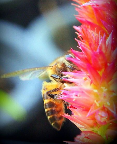 Bee, insecth, flowers, colors, counterpart