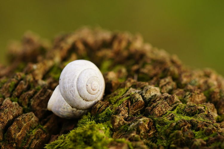 Snail Shall on a Fence Post Death Decay Macro Photography Snail Shell Wood Animal Shell Animal Themes Animals In The Wild Beauty In Nature Bleached Close-up Day Dead Dead Animal Fence Post Fragility Gastropod Moss Nature No People One Animal Outdoors Selective Focus Snail Spiral