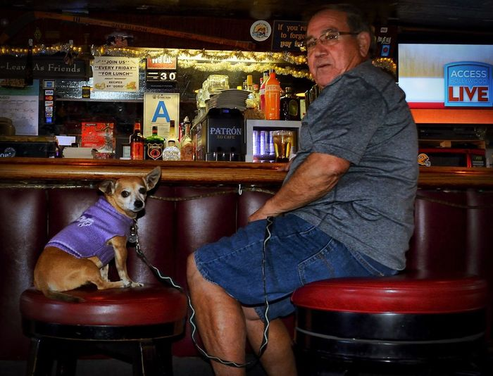 Paulie and Roscoe! Chihuahua Dog Dogs In Sweaters Bar Tattle Tale Culver City Eye4photography  EyeEm Dogs