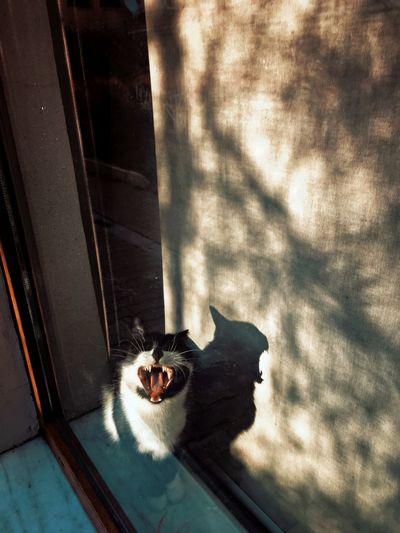 Cat lying down on window