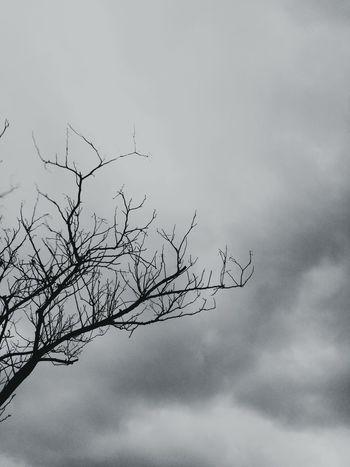 Ciel Sky Tree Cloud - Sky Nuages Nature Arbre Beauty In Nature Low Angle View Light Raining Day Rainy