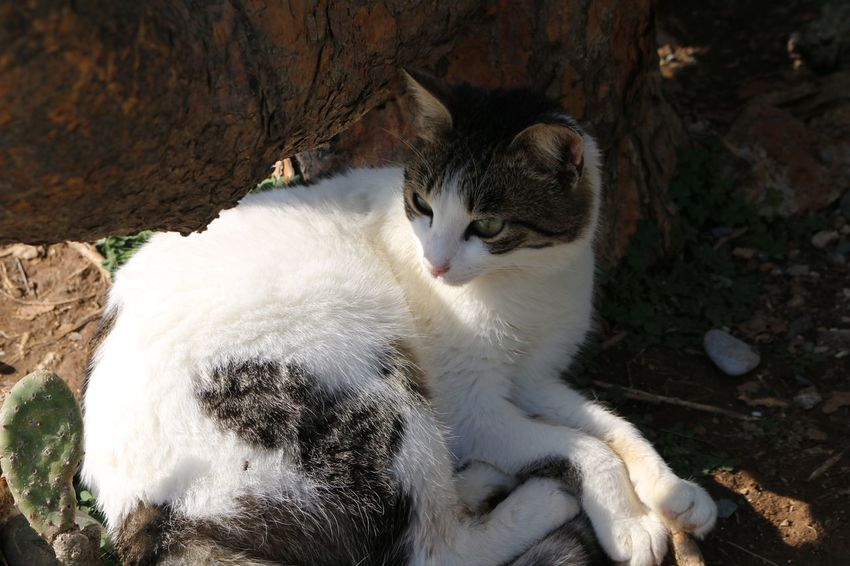 Cyprus Larnaca, Cyprus Larnaca Cats Of EyeEm Cat Lovers Cat♡ Cats Naturelovers Nature Photography Nature_collection Domestic Cat Animal Themes One Animal Feline Mammal Domestic Animals Pets No People Lying Down Outdoors Relaxation Day Sitting Nature Close-up