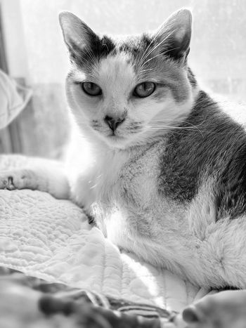 Blackandwhite One Animal Animal Animal Themes Mammal Cat Pets Feline Vertebrate Domestic Cat Domestic Animals Domestic Close-up Focus On Foreground Looking Away No People Indoors  Portrait Looking Animal Body Part Animal Head