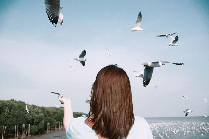 Rear View Of Woman Gesturing With Seagulls Flying Against Sky