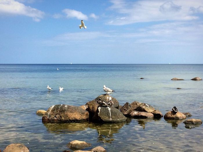 Seagulls on rock in sea against sky