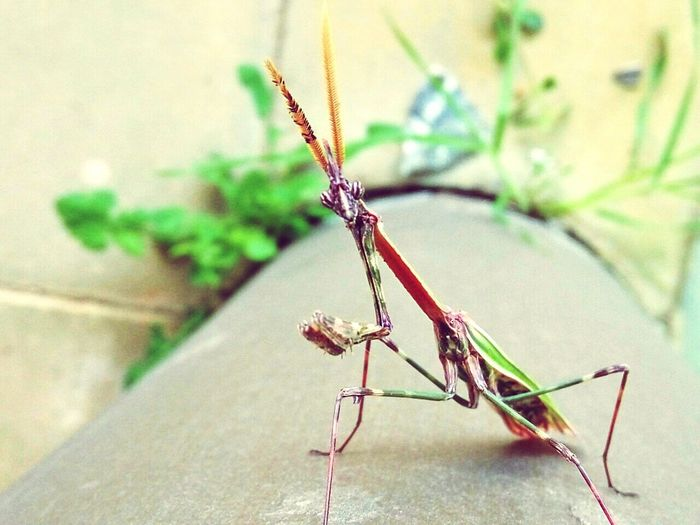 Insect Animal Wildlife Animal Themes Animals In The Wild One Animal No People Close-up Day Damselfly Nature Outdoors