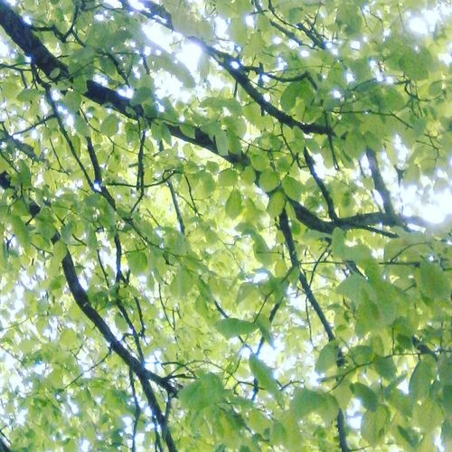 Leaf is short...😆 Tree Puns Green Color Low Angle View Beauty In Nature Freshness Live For The Story