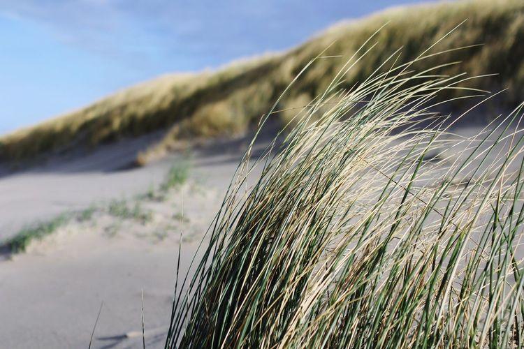 Beach Sunday in the Dunes Sun Blue Sky Holland