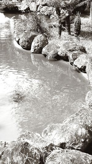 Water Nature Pond Water Blackandwhite Photography Outdoors Close-up