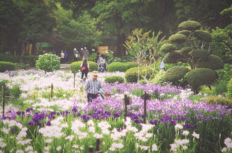 Flowers Japanese Garden Iris Getting Inspired Light And Shadow EyeEm Best Edits Japanese Culture The Traveler - 2015 EyeEm Awards at 城北公園 Osaka,Japan