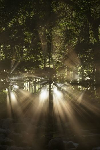 Night Landscape Light And Shadow River Illuminated Tree Nature Outdoors