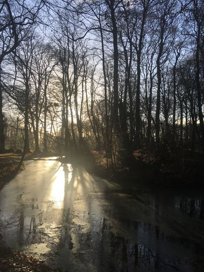 No Filter, No Edit, Just Photography Water Landscape Iphonephotography Pond Sunlight Tranquility Fragility Wintermorning Wintersun